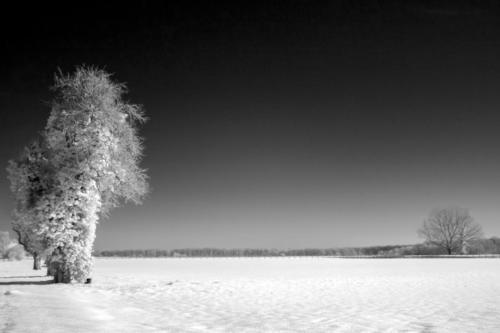 1hiver_10_02_18 ©Agata Szczypinska-Puisais